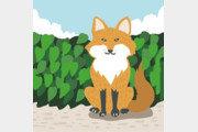 [첫 마음, 첫 발자국]여우를 만나다