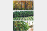 서울 남산 77배 면적에 나무 5000만 그루 심는다