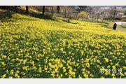 노란 봄이 왔다[포토 에세이]