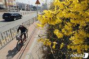 [날씨]25일 낮 최고 22도 봄날…'일교차 10도 이상' 아침-밤에는 쌀쌀