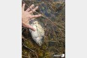 수질 1급수·상류 오염원 없는데…물고기 떼죽음 원인은?