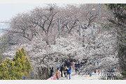 여의도 벚꽃길 폐쇄 10일→12일 오후 10시까지 연장