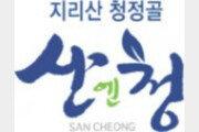 청정지역 지리산이 키운 달콤한 '산청딸기'