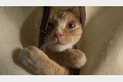 다큐 '고양이 집사' 14일 개봉, 공존하는 삶이란…