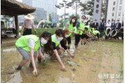 [퇴근길 한 컷]농협, 풍년 기원 '도심 속 전통 손모내기' 행사
