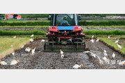 20일은 여름의 문턱 '소만'… 바빠진 농부들