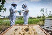 롤스로이스, '세계 꿀벌의 날' 맞아 꿀벌 보호 활동 동참