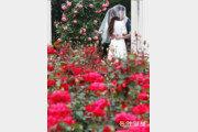 붉은 장미의 꽃말은 '열렬한 사랑'