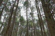 공기마을 편백숲[바람개비]
