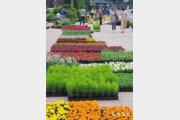 꽃단장한 서울광장