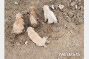 땅 파며 우는 어미개의 모성애…수해로 땅에 묻힌 강아지 구조