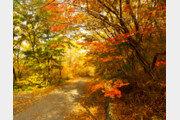 가을, 이토록 짧은 계절[이재국의 우당탕탕]〈45〉