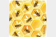 개미와 꿀벌, 고밀도 사회의 위생수칙[서광원의 자연과 삶]〈28〉