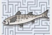 미로의 세계, 물고기 이름[김창일의 갯마을 탐구]〈52〉