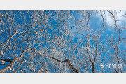 칼바람에 하얗게 질려도 겨울나무는 춤춘다