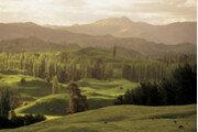 코로나 장기화에 희망을 심다…뉴질랜드 '희망의 숲' 조성