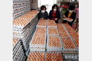 고병원성 AI 확산에 오르는 계란값
