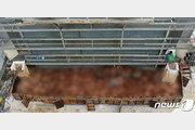 화성시 산란계 농장 고병원성 AI 확진…반경 3km 살처분