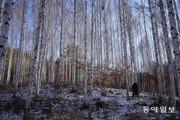"""""""산림은 기후변화 백신""""… 산림청, 2050년까지 30억 그루 심는다"""