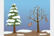 활엽수에서 배우는 '비움'의 지혜[서광원의 자연과 삶]〈32〉