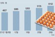 '에그머니' 계란 한판에 1만원