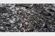 해골바가지 가득한 5000m 히말라야 호수 미스터리