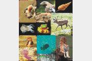 생태학 연구 새바람… 'SNS 사진'서 자연의 위기 신호 찾는다