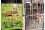 사자 대타 뛰는 개?…'재정난' 中 동물원의 황당 전시