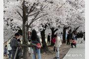 '벚꽃엔딩'은 '코로나에도 '네버엔딩'…또 '역주행'