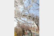 올 3월, 역대 가장 따뜻했다