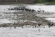 금강·영산강·낙동강 11개 보, 3년반 개방했더니…여름철 녹조 95% 이상 감소