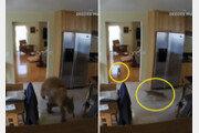 """""""어딜 들어와!"""" 가정집 침입한 곰 내쫓은 반려견들 (영상)"""