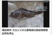 후쿠시마 앞바다서 기준치 3배 '방사능 우럭'…출하 제한
