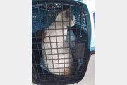 교도소 기웃대던 고양이…잡고 보니 '마약 운반책'