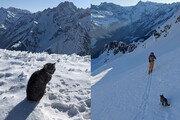 등산객 따라 해발 3000m 산 오른 고양이…알고 보니 등산 마스터?