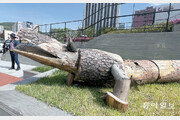 나무로 만든 악어