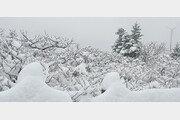 4월의 마지막 날, 설악산에 눈 '펑펑' 내렸다