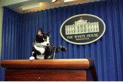 바이든, '고양이 집사' 된다…'퍼스트 캣' 곧 백악관 입성