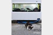 [고양이 눈]조마조마