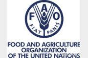 세계식량가격지수 11개월째 올라…상승 폭은 둔화