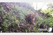 인구 1000만 도시 표범 3마리 탈출했는데…동물원 '쉬쉬'