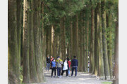 초여름 더위 식혀주는 삼나무 숲길