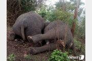 """인도 숲에서 코끼리 18마리 떼죽음…""""벼락 맞았다"""""""