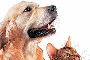 [책의 향기]개와 고양이를 이해하는 가장 완벽한 방법