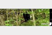 광양 백운산서 반달가슴곰 잇따라 목격…당국, 주의 당부
