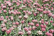 DMZ자생식물원, 6월 13일까지 북방계식물전시원 일반에 개방