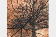 [책의 향기]나무는 역사를 몸에 새긴다, 전례없는 기후변화까지도