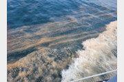 포항 연안에 올해 처음 적조 발생…무해성 조류인 '야광충'