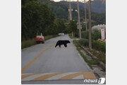 '곰 내려온다'…남원 산동면서 170㎏ 반달곰 출몰