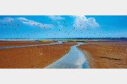 지구 순례 철새들의 지상낙원… 습지는 펄떡이는 생명의 성지